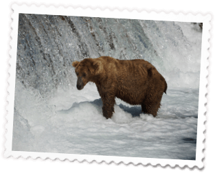 Bear At Waterfall - Day Trips/Charters - Glacier Tours - Bear Viewing - Anchorage