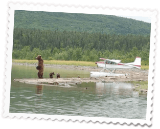 Bears By Plane 1 - 7 Day Package