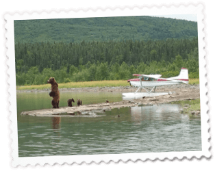 Bear Viewing Tours