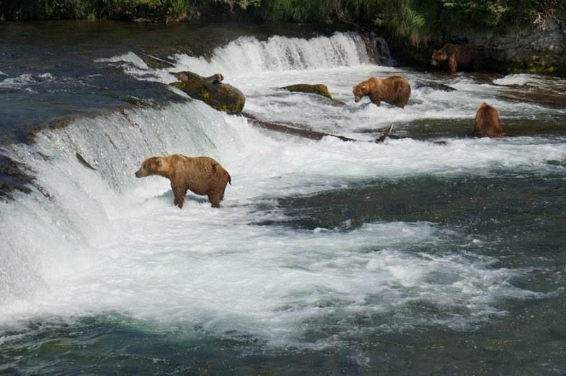DSC00410 - Bear Viewing Info