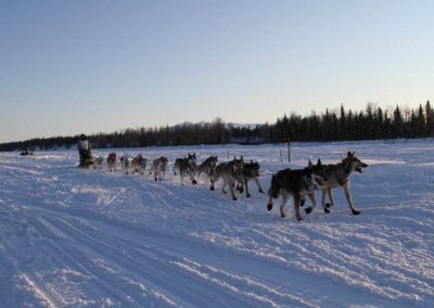IMG 3873 400x284 - Iditarod Photos